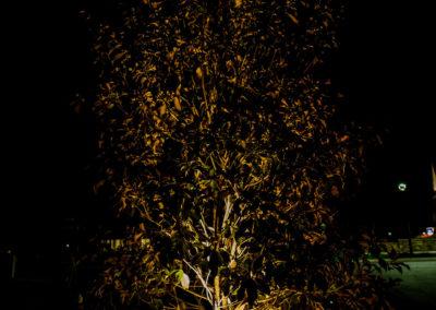 Hyatt-landscapelighting5